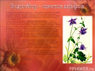Водосбор, или аквилегия (Aquilegia), – многолетнее травянистое растение из семей