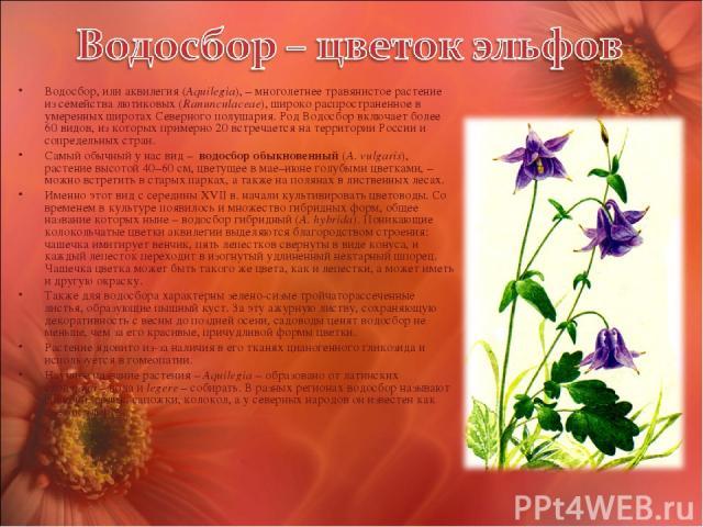 Водосбор, или аквилегия (Aquilegia), – многолетнее травянистое растение из семейства лютиковых (Ranunculaceae), широко распространенное в умеренных широтах Северного полушария. Род Водосбор включает более 60 видов, из которых примерно 20 встречается…