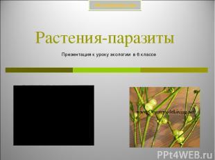 Растения-паразиты Презентация к уроку экологии в 6 классе Prezentacii.com