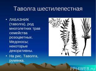 Таволга шестилепестная ЛАБАЗНИК (таволга), род многолетних трав семейства розоцв