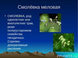 Смолёвка меловая СМОЛЕВКА, род однолетних или многолетних трав, реже полукустарн