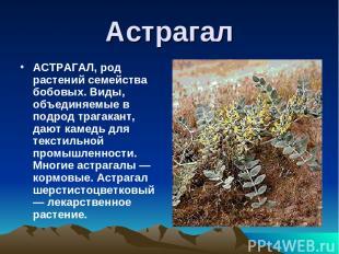 Астрагал АСТРАГАЛ, род растений семейства бобовых. Виды, объединяемые в подрод т