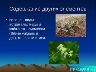 Содержание других элементов селена - виды астрагала; меди и кобальта - смолёвки