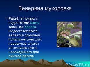 Венерина мухоловка Растёт в почвах с недостатком азота, таких как болота. Недост