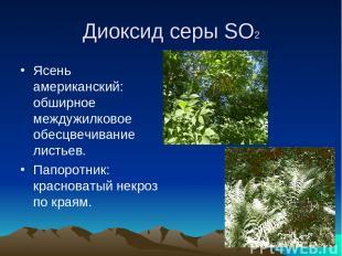 Диоксид серы SO2 Ясень американский: обширное междужилковое обесцвечивание листь