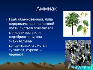 Аммиак Граб обыкновенный, липа сердцелистная: на нижней части листьев появляется