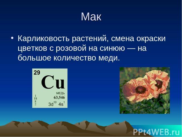 Мак Карликовость растений, смена окраски цветков с розовой на синюю — на большое количество меди.