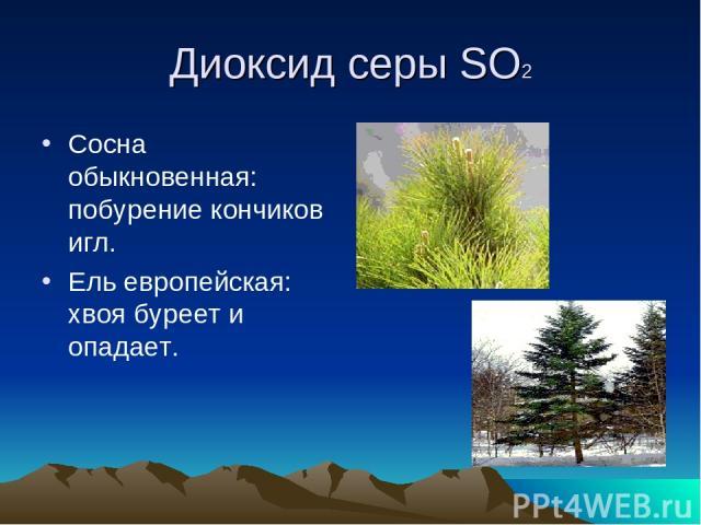 Диоксид серы SO2 Сосна обыкновенная: побурение кончиков игл. Ель европейская: хвоя буреет и опадает.