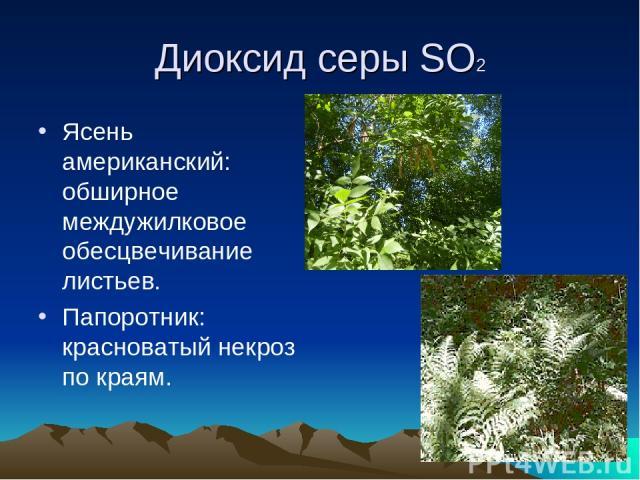 Диоксид серы SO2 Ясень американский: обширное междужилковое обесцвечивание листьев. Папоротник: красноватый некроз по краям.