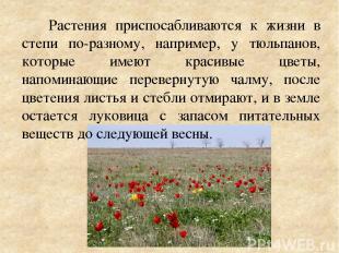 Растения приспосабливаются к жизни в степи по-разному, например, у тюльпанов, ко