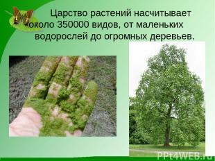 Царство растений насчитывает около 350000 видов, от маленьких водорослей до огро