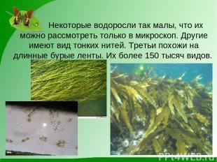Некоторые водоросли так малы, что их можно рассмотреть только в микроскоп. Други
