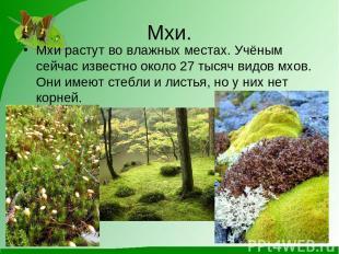 Мхи. Мхи растут во влажных местах. Учёным сейчас известно около 27 тысяч видов м