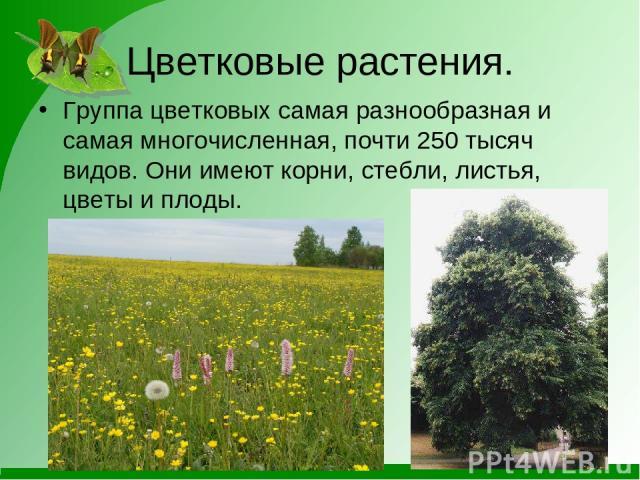 Цветковые растения. Группа цветковых самая разнообразная и самая многочисленная, почти 250 тысяч видов. Они имеют корни, стебли, листья, цветы и плоды.