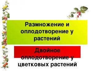 Размножение и оплодотворение у растений Двойное оплодотворение у цветковых расте