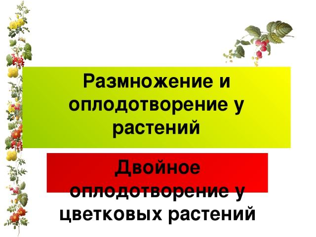 Размножение и оплодотворение у растений Двойное оплодотворение у цветковых растений Prezentacii.com