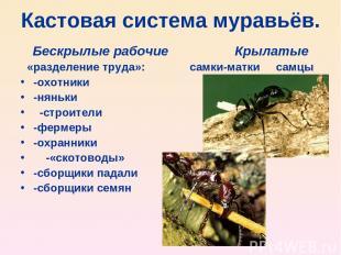 Кастовая система муравьёв. Бескрылые рабочие Крылатые «разделение труда»: самки-