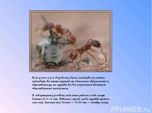 Если у пчел и у ос в пределах одного семейства мы можем наблюдать все этапы пе