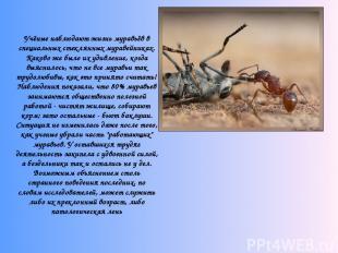 Учёные наблюдают жизнь муравьёв в специальных стеклянных муравейниках. Каково