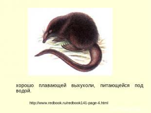 хорошо плавающей выхухоли, питающейся под водой. http://www.redbook.ru/redbook14