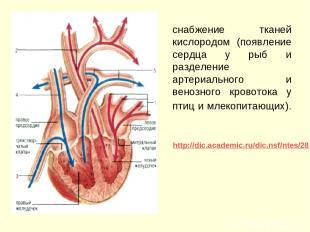 снабжение тканей кислородом (появление сердца у рыб и разделение артериального и