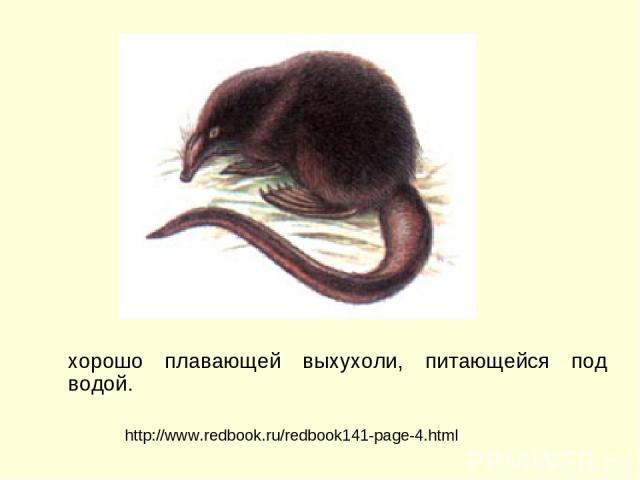 хорошо плавающей выхухоли, питающейся под водой. http://www.redbook.ru/redbook141-page-4.html