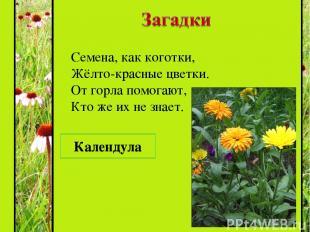 Семена, как коготки, Жёлто-красные цветки. От горла помогают, Кто же их не знает