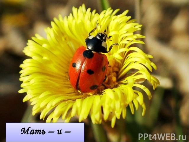 Мать – и – мачеха