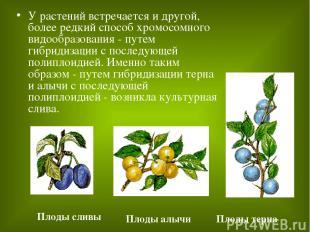 У растений встречается и другой, более редкий способ хромосомного видообразовани