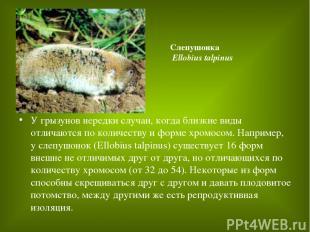 У грызунов нередки случаи, когда близкие виды отличаются по количеству и форме х