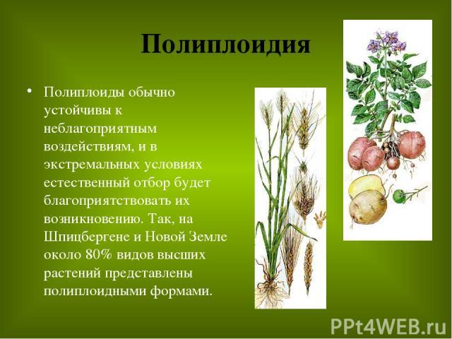 Полиплоидия Полиплоиды обычно устойчивы к неблагоприятным воздействиям, и в экстремальных условиях естественный отбор будет благоприятствовать их возникновению. Так, на Шпицбергене и Новой Земле около 80% видов высших растений представлены полиплоид…