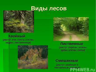 Виды лесов Хвойный Лиственные Смешанные (растут ели, пихта, сосны, кедры, листве