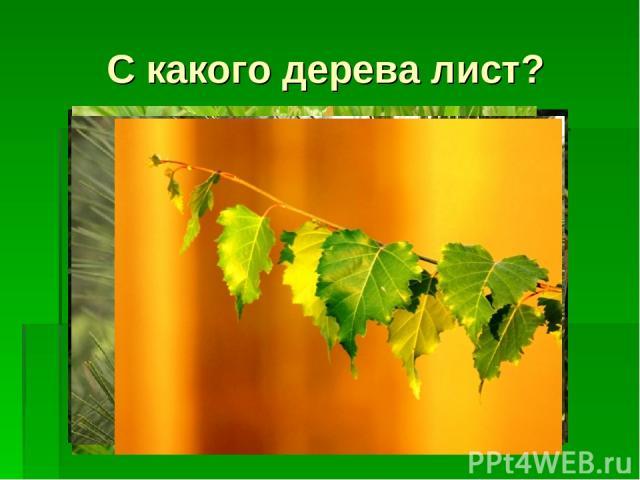 С какого дерева лист?