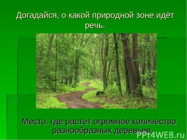 Догадайся, о какой природной зоне идёт речь. Место, где растёт огромное количество разнообразных деревьев.