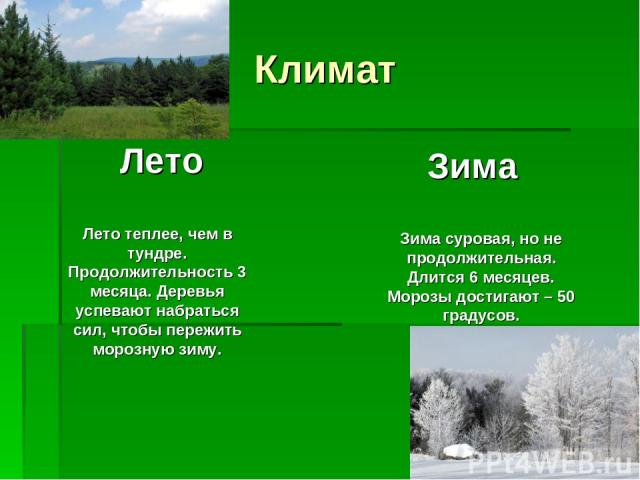 Климат Лето Зима Лето теплее, чем в тундре. Продолжительность 3 месяца. Деревья успевают набраться сил, чтобы пережить морозную зиму. Зима суровая, но не продолжительная. Длится 6 месяцев. Морозы достигают – 50 градусов.