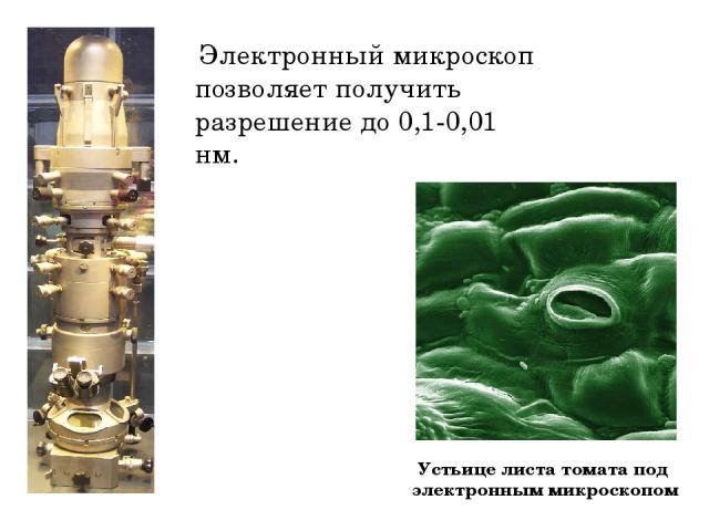 Электронный микроскоп позволяет получить разрешение до 0,1-0,01 нм. Устьице листа томата под электронным микроскопом