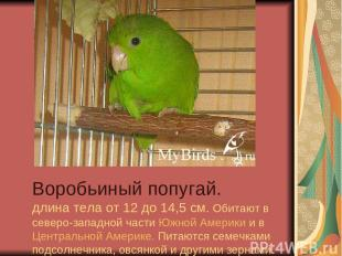 Воробьиный попугай. длина тела от 12 до 14,5 см. Обитают в северо-западной части