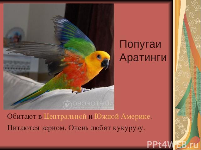 Попугаи Аратинги Обитают в Центральной и Южной Америке. Питаются зерном. Очень любят кукурузу.