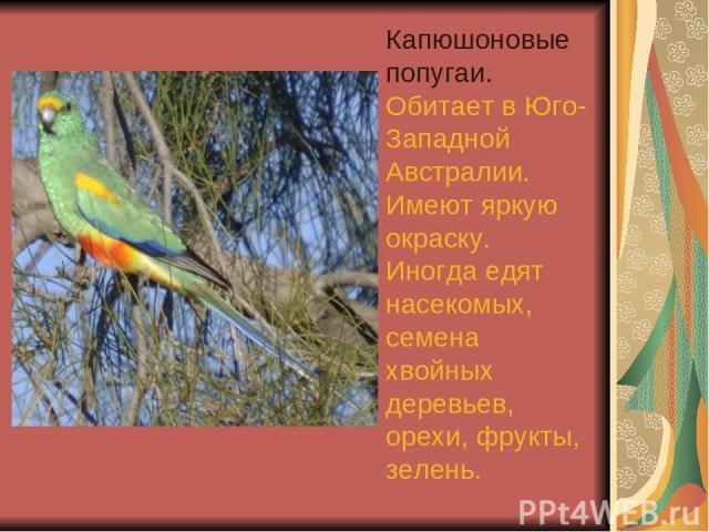 Капюшоновые попугаи. Обитает в Юго-Западной Австралии. Имеют яркую окраску. Иногда едят насекомых, семена хвойных деревьев, орехи, фрукты, зелень.