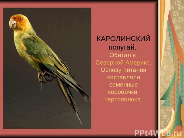 КАРОЛИНСКИЙ попугай. Обитал в Северной Америке. Основу питания составляли семенные коробочки чертополоха.