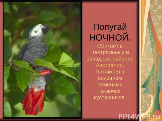 Попугай НОЧНОЙ. Обитает в центральных и западных районах Австралии. Питаются в основном семенами колючих кустарников.