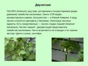 ПАСЛЕН (Solanum), род трав, кустарников и полукустарников (редко деревьев) семей