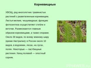 ХВОЩ, род многолетних травянистых растений с разветвленным корневищем. Листья ме