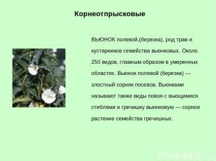 ВЬЮНОК полевой,(березка), род трав и кустарников семейства вьюнковых. Около 250