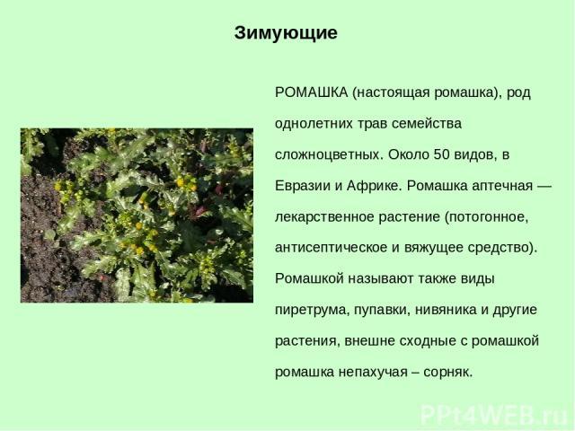 РОМАШКА (настоящая ромашка), род однолетних трав семейства сложноцветных. Около 50 видов, в Евразии и Африке. Ромашка аптечная — лекарственное растение (потогонное, антисептическое и вяжущее средство). Ромашкой называют также виды пиретрума, пупавки…