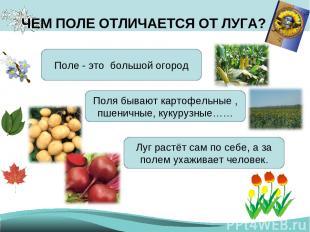 ЧЕМ ПОЛЕ ОТЛИЧАЕТСЯ ОТ ЛУГА? Поле - это большой огород Поля бывают картофельные