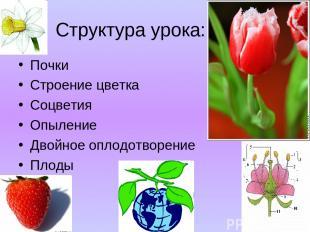 Структура урока: Почки Строение цветка Соцветия Опыление Двойное оплодотворение