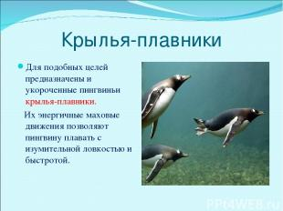 Крылья-плавники Для подобных целей предназначены и укороченные пингвиньи крылья-