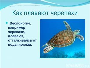 Как плавают черепахи Веслоногие, например черепахи, плавают, отталкиваясь от вод
