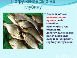 Погружение рыб на глубину Изменяя объем плавательного пузыря рыба способна увели